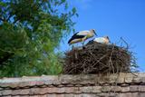 Cozy Nest
