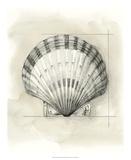 Shell Schematic III