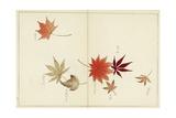 Japanese Leaf Variation