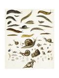 Scientific Illustrations of Snails and Slugs