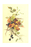 Blackberries with Leaves and Branches