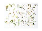 Watercolor Variety of Leaves  Vines  Berries  and Flowers