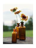 Yellow Orange Flowers in Dark Glass Vases