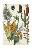 Botanical Pine Cones  Evergreen Branches  and Flowers