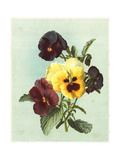 Painterly Pansies Bouquet