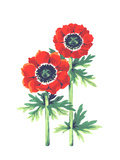 Red Anemone Flowers with Stem and Leaves