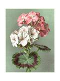 Painterly Geranium Bouquet