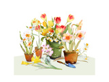 Watercolor of Tulips and Daffodils in Pots  Vase  and Bucket