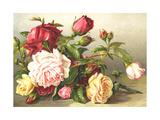 Mixed Rose Display