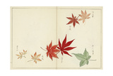 Botanical Illustrations of Japanese Leaves