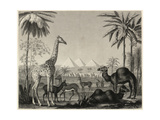 Textured Giraffe and Camels with Pyramid Landscape