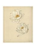 Pair of Open White Lotus Flowers