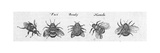 Multiple Winged Insects in Black and White