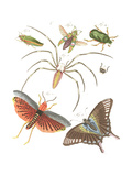 Winged Insects and Beetles Illustrations