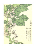 Purple Flowers on Green Stem with Asian Writing