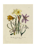 Daffodils  Lilies  and Other Flowers