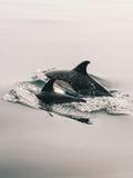 Family Dolphin Sealife