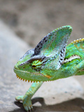 Exotic Reptile Animal 2