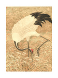 Crane Searching Through Tall Grasses with Tip of Beak