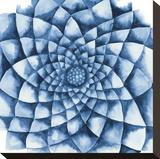 Blue Zinnia