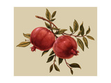Branch with Two Pomegranates