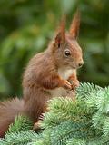 Animal Squirrel Nature Reproduction d'art par Wonderful Dream