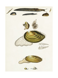 Slugs and Clam Shell Scientific Illustrations