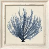 Coastal Seaweed III
