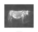 Charcoal Bovine Study I