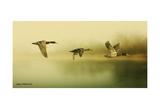 Ducks Flying