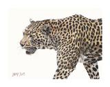 Passing Leopard