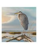 Marsh Watch - Great Blue Heron