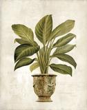 Botanica Fern