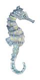 Pretty Seahorse