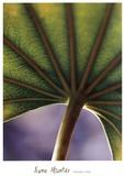 Ricepaper Plant-7
