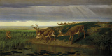 Deer on the Prairie  1884