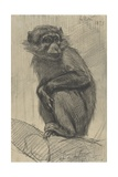 Monkey on a Branch  1879