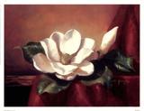 Magnolia Vignette l