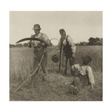 Farmworkers During the Barley Harvest in Suffolk  C 1883-87
