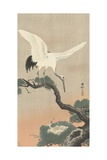Japanese Crane on Pine Branch  1900-30