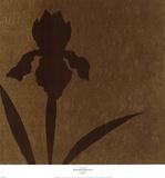 Iris (Metallic)
