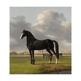 Adriaan Van Der Hoop'S Trotter 'De Vlugge' (The Fast One) in a Meadow  1828