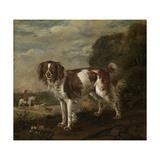 A Spaniel  1653