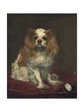 A King Charles Spaniel  1866