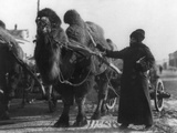 Harriet Chalmers Adams with Camel Pulling Cart  Gobi Desert