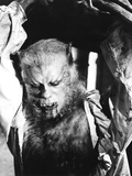 The Curse of the Werewolf  Oliver Reed  1961