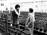 Harold and Maude  Bud Cort  Ruth Gordon  1971
