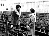 Harold and Maude  from Left  Bud Cort  Ruth Gordon  1971