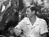 Mark of the Gorilla  Johnny Weissmuller  1950
