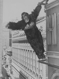 Mighty Joe Young  Publicity Photo  1949